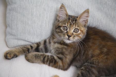 loosen up: Kitten relaxing on the sofa