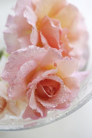 beautiful rose: Hermosa rosa de cristal de colores