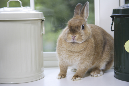 hobby: Rabbits are between hobby cans