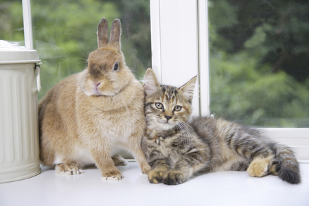 good: Kitten nestling good friends rabbit