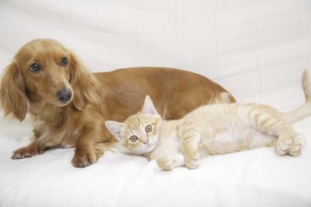 침대에서 좋은 친구 미니어처 새끼 고양이