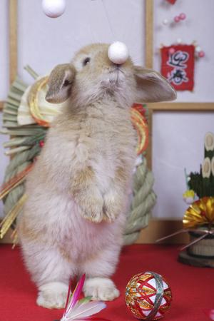 rabbit standing: New Year of Rabbit standing pose Stock Photo