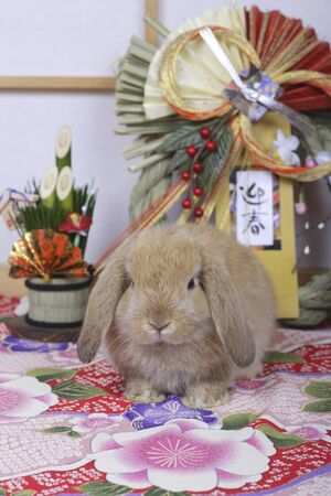 enclosing: Japanese-style image of the new year of the rabbit