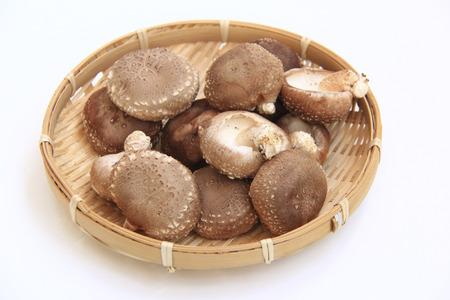 rawness: Shiitake mushroom Stock Photo