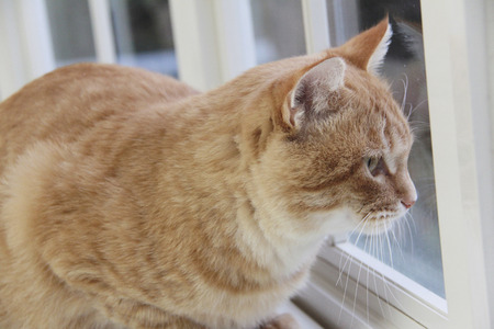 living organisms: Windowsill cat