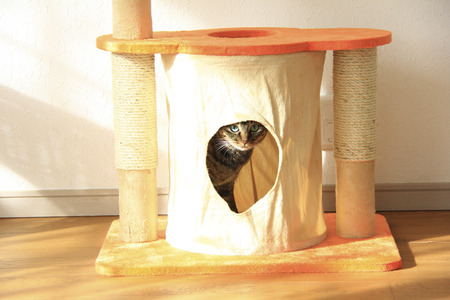 cat Tower 版權商用圖片