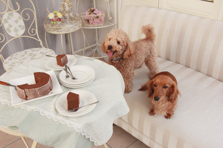 snack time: Pets and snack time