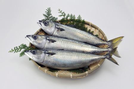 rawness: Mackerel three animals