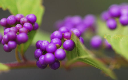 dark purple: Dark purple small purple Stock Photo