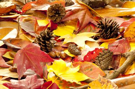 autumn leaves: Autumn leaves