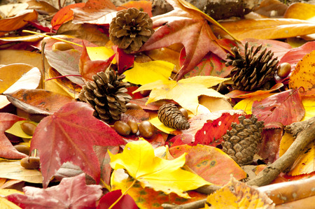 defoliation: Autumn leaves