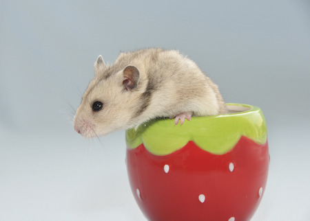 living thing: Cute hamster