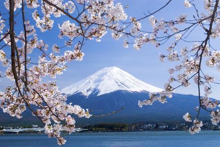 the world cultural heritage: Mt. Fuji and Lake Kawaguchi cherry