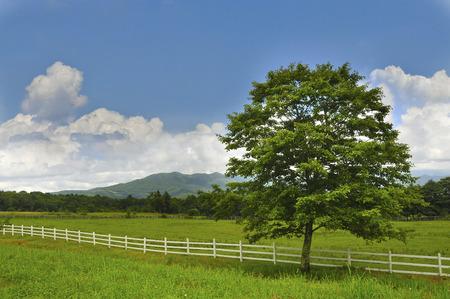 Kiyosato plateau one tree