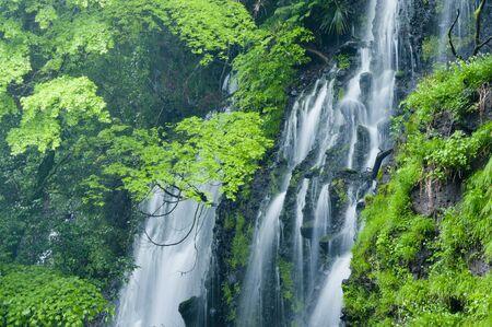 Shiraito waterfall Green