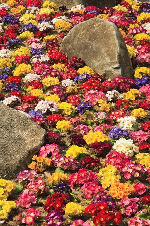 flower bed: Flower bed Stock Photo