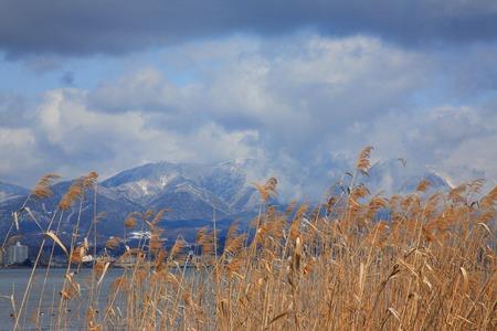 canne: Lake Biwa di canne appassite