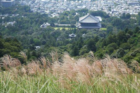 pampas: Pampas grass and Todaiji Stock Photo