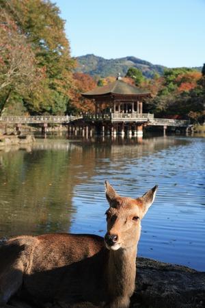 animal only: Ukimi-deer