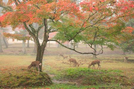 todaiji: Todaiji back of fog Stock Photo