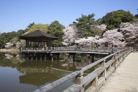 nara park: Cherry Blossom ukimido