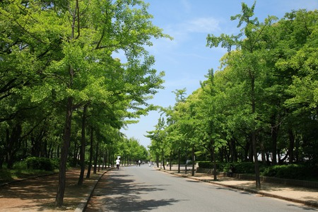 green park: Fresh green of Osaka Castle Park