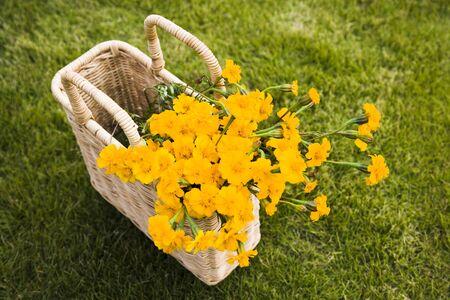 flower basket: Flower basket on the lawn