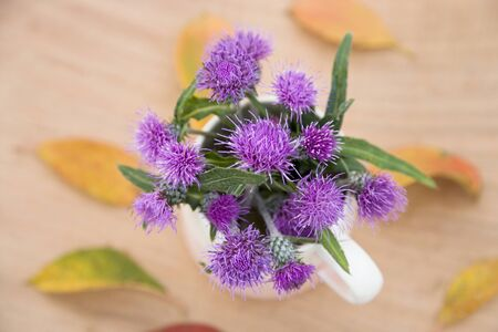 thistle: Thistle flowers