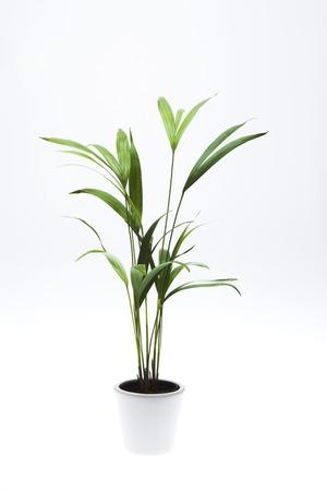 Les plantes à feuillage Banque d'images - 46313827