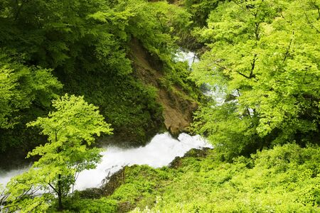 nirvana: Waterfall of fresh green and nirvana
