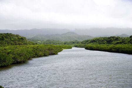 mangrove: Before the mangrove Yoshikawa