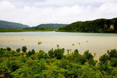 mangrove: Mangrove Urauchi Stock Photo
