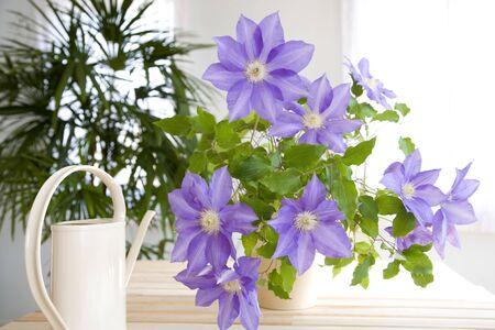 花と Joro