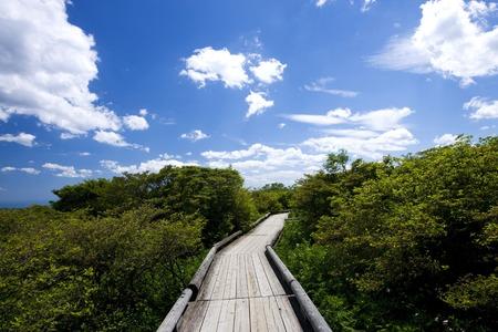 orchards: Yawata azalea orchards boardwalks