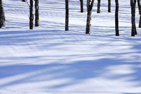 snowy field: Shadow of a snowy field grove