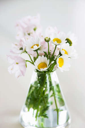 reviving: Flowers in a vase Stock Photo