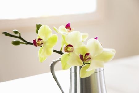 pewter: Orchid flowers Stock Photo
