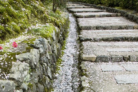 stone steps: Stone steps and cherry petals Stock Photo