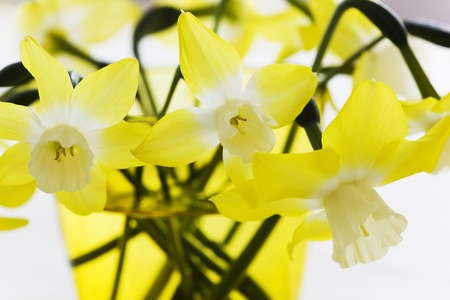 vain: Narcissus flower Stock Photo