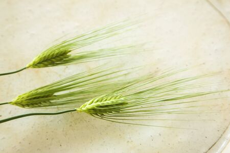 tableware life: Blue wheat and Sarah Stock Photo