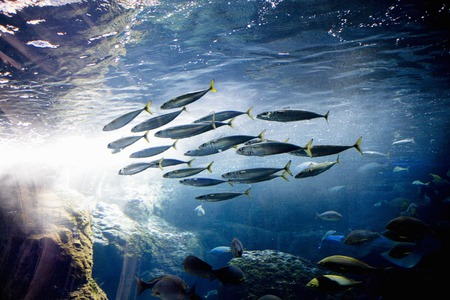 New Enoshima Aquarium