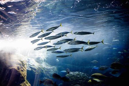 pez pecera: Nuevo Enoshima Aquarium
