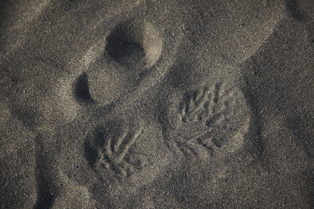 that: Footprints that were attached to the sand