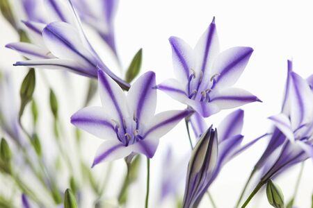 tele: Bird Tele 1er Dee flowers Stock Photo