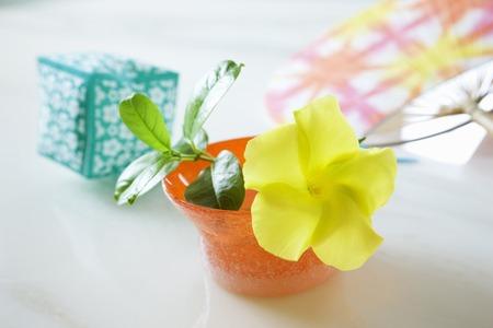 gokayama: Depuradenia of flowers and paper balloon
