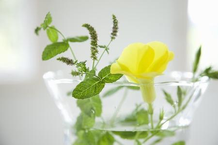 Depuradenia とミントの香り