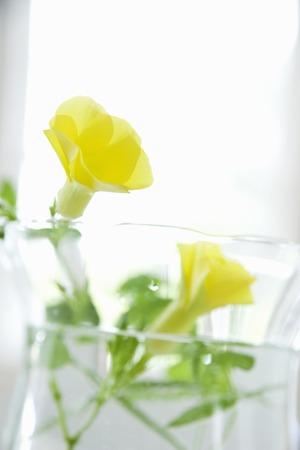 material de vidrio: Depuradenia flores y cristaler�a