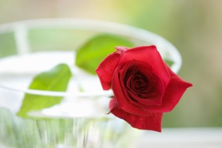 material de vidrio: Rose y cristaler�a
