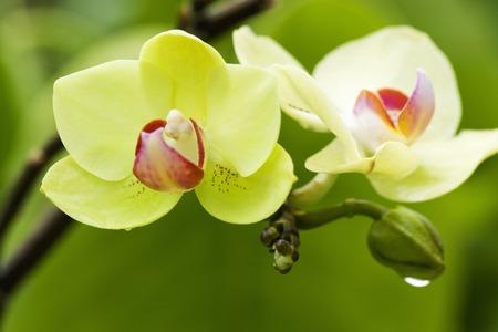 bushy plant: Orchid flowers Stock Photo