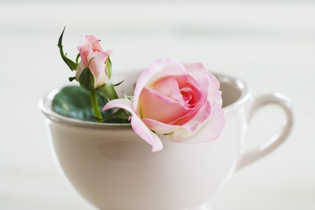 into: Rose went into the cup